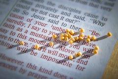 Semilla de mostaza y biblia abierta Fotos de archivo libres de regalías