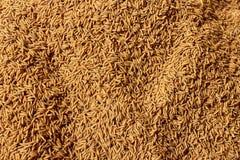 Semilla del arroz, Paddy Background Imagen de archivo