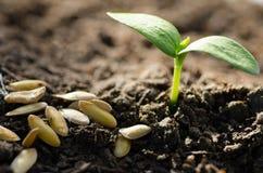Semilla y planta que crecen sobre fondo verde Imágenes de archivo libres de regalías
