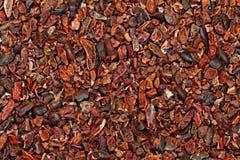 Semillas de cacao crudas Foto de archivo libre de regalías