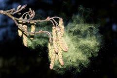 Semillas de dispersión Foto de archivo