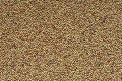 Semillas de la alfalfa Imagen de archivo