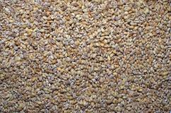 Semillas de la cebada de perla imagen de archivo