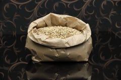 Semillas de la cebada para elaborar la cerveza Foto de archivo