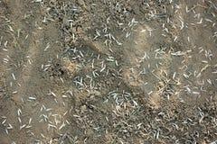 Semillas de la hierba en suelo. Foto de archivo