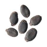 Semillas de la lufa o del aegyptiaca egipcia de la lufa aisladas en el fondo blanco Imagen de archivo libre de regalías