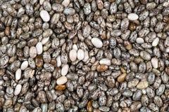 Semillas de la planta de Chia (hispanica de Salvia) Foto de archivo libre de regalías