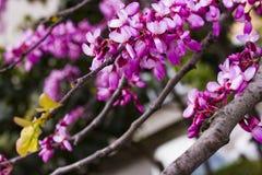 Semillas de la primavera Foto de archivo libre de regalías