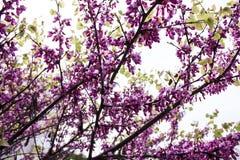 Semillas de la primavera Fotografía de archivo