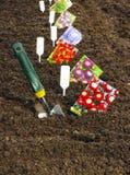 Semillas de la siembra en el suelo en el jardín Imágenes de archivo libres de regalías