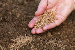 Semillas de la siembra en un jardín Fotografía de archivo libre de regalías