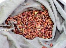 Semillas de la zahína en un bolso Semillas rojas de una escoba Popa de la zahína imagenes de archivo