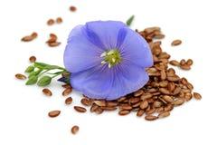 Semillas de lino con la flor Fotos de archivo libres de regalías