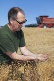 Semillas de lino de la explotación agrícola del granjero Imagen de archivo
