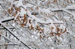 Semillas debajo de la nieve Imágenes de archivo libres de regalías