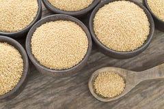 Semillas del amaranto - amaranto Fotografía de archivo libre de regalías