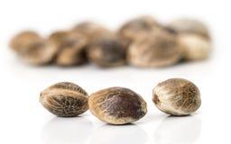 Semillas del cáñamo en un fondo blanco Semillas para la marijuana creciente en un fondo blanco imagen de archivo