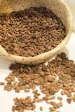 Semillas del cacao Fotos de archivo libres de regalías
