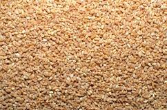 Semillas del grano del trigo imagen de archivo libre de regalías