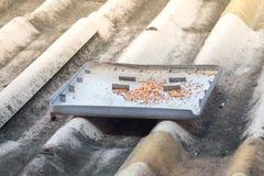 Semillas del pájaro en bandeja en el tejado viejo Imágenes de archivo libres de regalías