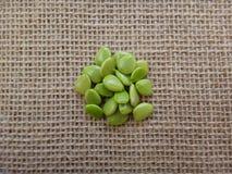 Semillas inmaduras de la cerca de la flor Foto de archivo libre de regalías
