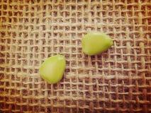 Semillas inmaduras de la flor de pavo real Imagen de archivo