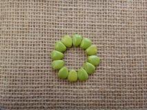 Semillas inmaduras del flowerfence - diseño del círculo Fotos de archivo