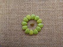 Semillas inmaduras del flowerfence - diseño del círculo Imágenes de archivo libres de regalías