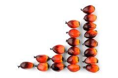 Semillas oleaginosas frescas de palma Fotografía de archivo