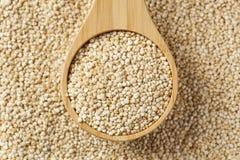 Semillas orgánicas crudas de la quinoa Foto de archivo
