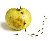 Semillas que se escapan abajo de la cuerda de la manzana estropeada Foto de archivo