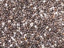 Semillas secas de la planta de Chia (hispanica del salvia) Fotografía de archivo libre de regalías