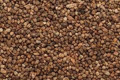 Semillas verdes orgánicas del cardamomo (cardamomum del Elettaria) imagen de archivo