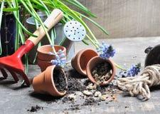 Semillas y accesorios del jardín Fotografía de archivo libre de regalías