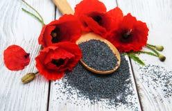 Semillas y flores de amapola Imágenes de archivo libres de regalías