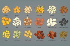 Semillas y granos de la comida, habas del café y cacao Fotografía de archivo