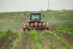 Semina dell'agricoltore, seminante i raccolti al campo Immagine Stock Libera da Diritti