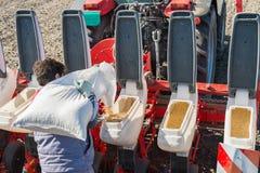 Semina della soia Immagini Stock Libere da Diritti