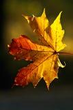 Semitones di autunno Fotografie Stock Libere da Diritti