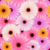 semless blommamodell Royaltyfri Bild