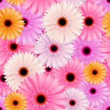 Semless flower pattern Royalty Free Stock Image