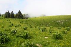 Semnoz的高山领域在开胃菜,法国的 免版税库存照片