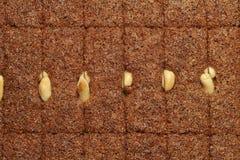 semolina десерта Стоковое Изображение RF