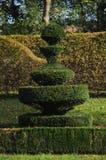 Sempervirens de Buxus/topinaries boîte commune Photos libres de droits