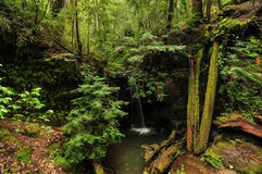 Sempervirens Falls Stock Photography