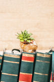 Sempervivum σε ένα κοχύλι σαλιγκαριών Στοκ φωτογραφία με δικαίωμα ελεύθερης χρήσης