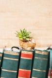 Sempervivum auf einem Schneckenhaus Lizenzfreie Stockfotografie