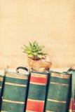 Sempervivum auf einem Schneckenhaus Lizenzfreie Stockfotos