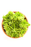 Sempervivum dans un bac Images stock
