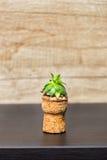 Sempervivum im Korken Stockbilder